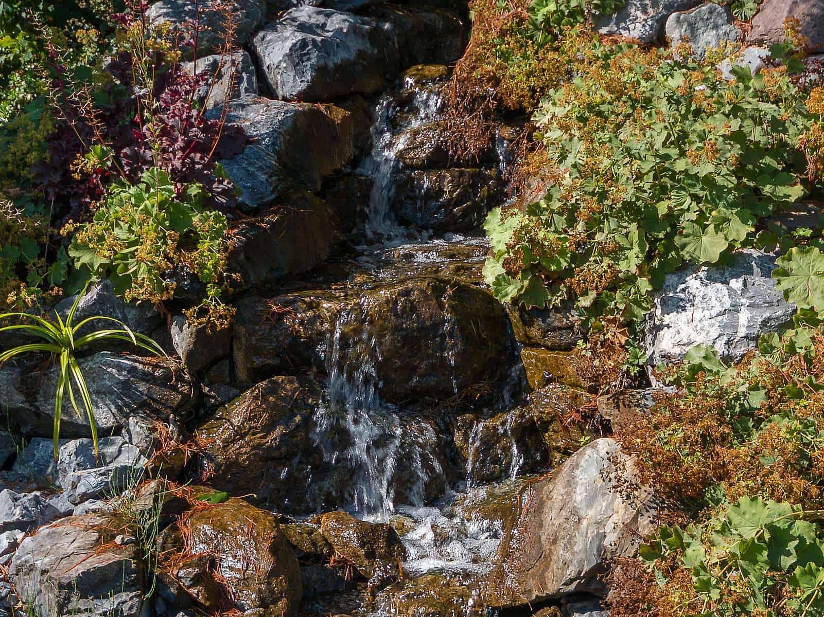 Ein schöner Blick auf unseren Kalksteinbachlauf der die ursprünglich begrünte Seite unseres Hügels belebt.