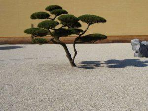 Einfache asiatische Gestaltung mit Kies und Bonsai. Ein ruhiger Steingarten...nicht ganz original...